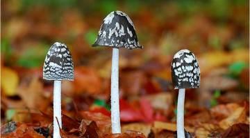 cogumelos2