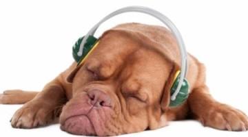 cao-ouvindo-musica-classica-saude-10334